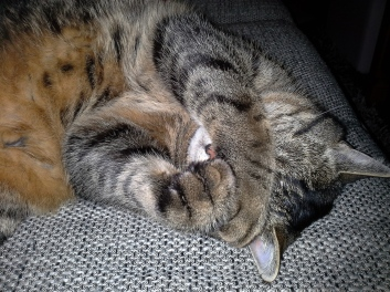 Licht aus! Ich schlafe noch!