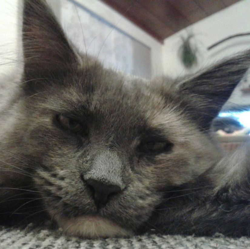 """Katzenwahnsinnblog """"Zweierlei eignet sich als Zuflucht vor den Widrigkeiten des Lebens, Musik und Katzen."""""""